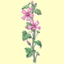 Malva Real Flor del País Cortada (Malva Silvestris) - 100 gramos