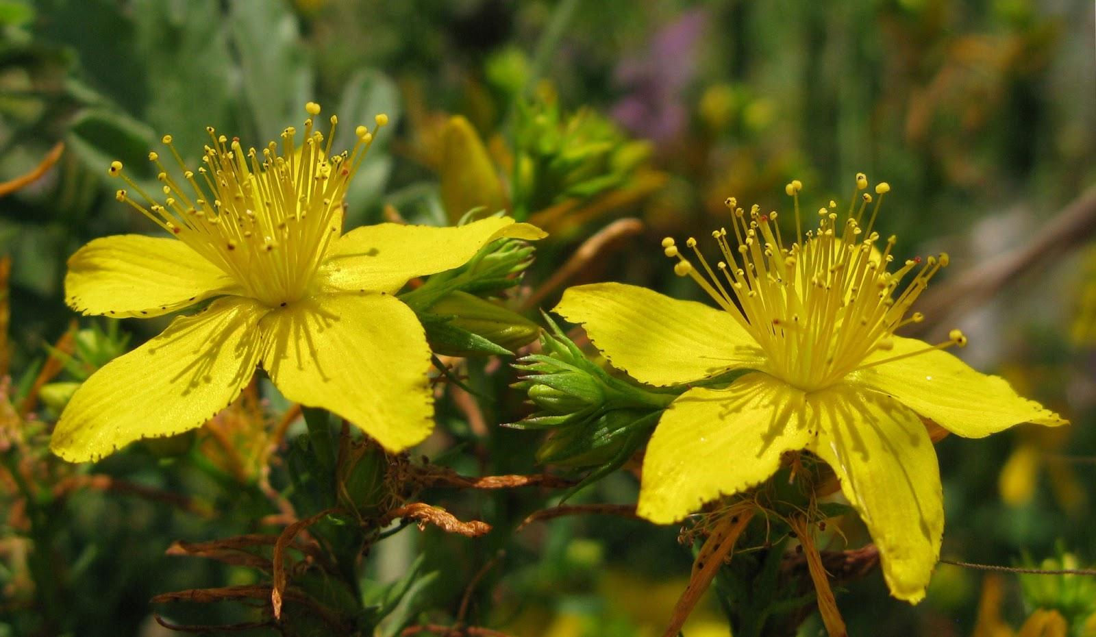 plantas con propiedades anabolicas