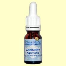 Agrimonia - Agrimony - 10 ml - Lotus Blanc