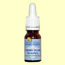 Cerasifera - Cherry Plum - 10 ml - Lotus Blanc