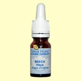 Haya - Beech - 10 ml - Lotus Blanc