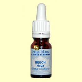 Haya - Beech - 30 ml - Lotus Blanc