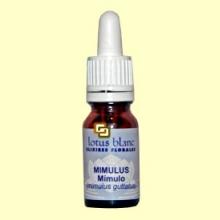 Mímulo - Mimulus - 10 ml - Lotus Blanc