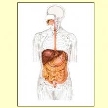 Digestiones pesadas - Artículo informativo