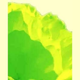 La clorofila - Energía vital