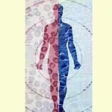 Sistema inmune - Barrera contra las infeciones
