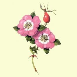 Información de Rosa Mosqueta Natural