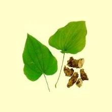 Ñame Silvestre (Dioscorea villosa L.)