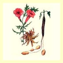 Plantas para combatir problemas oseoarticulares