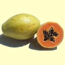 La Papaya - Fruta del Árbol del Papayo