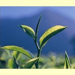 Té Verde Chai - 100 gr.