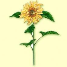 Helenio planta cortada 100 gramos.