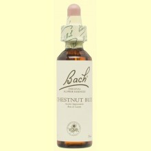 Brote de Castaño - Chestnut Bud - 20 ml - Bach