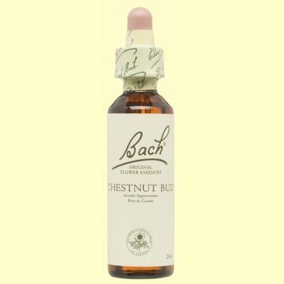 Brote de Castaño - Chestnut Bud - 20 ml - Bach