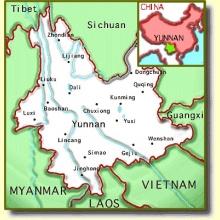 Té Verde Yunnan (100gr.)