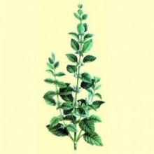 Melisa / Torongil - 30 gramos