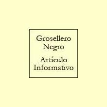 Grosellero Negro - Artículo informativo de Rafael Sánchez - Naturópata
