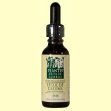 Estrella de Belén - Leche de Gallina - Cultivo Ecológico - 30 ml - Plantis