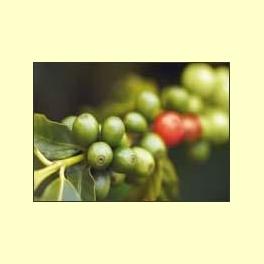 El ácido clorogénico del café - Información
