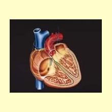 Los Omega 3 presentan efecto cardioprotector y antienvejecimiento
