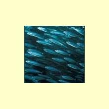 El aceite de pescado y el cáncer de mama - Información