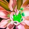 Información resumida de cada una de las Flores de Bach