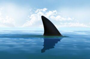 El Aceite de hígado de tiburón
