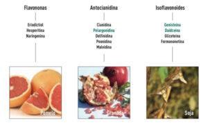 flavonoides2