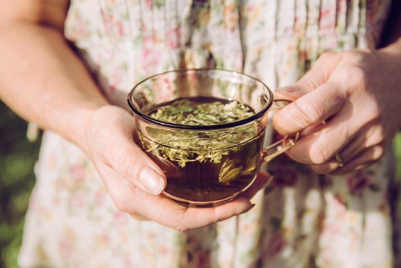 plantas-medicinales-antivirales