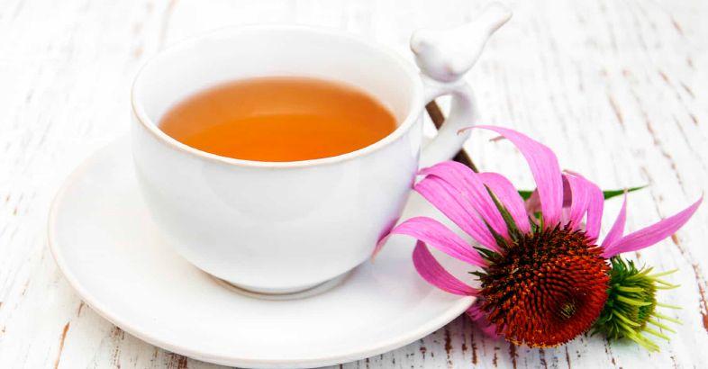 plantas-medicinales-antivirales-equinacea
