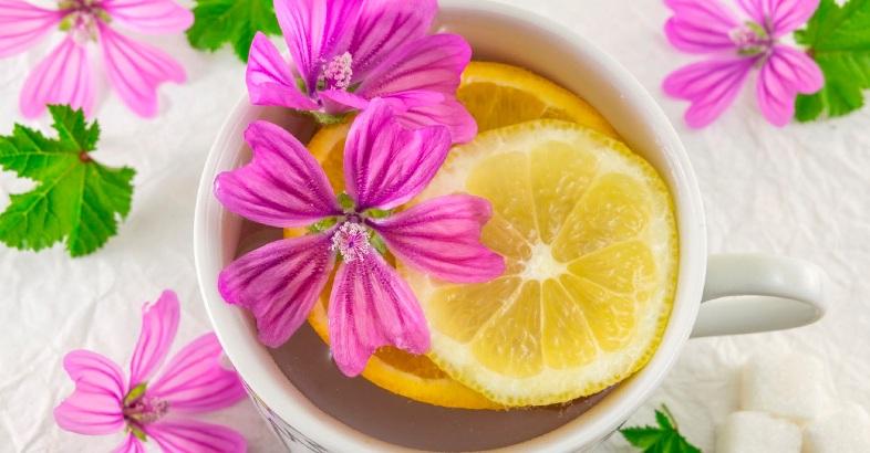 infusiones-para-niños-aliviar-gripes-te-malva-planta-propiedades