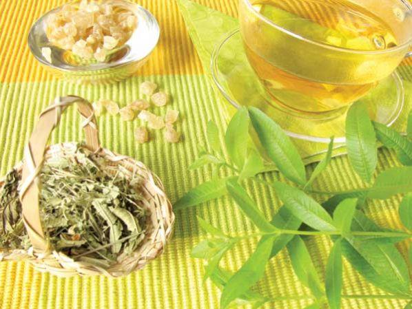 planta medicinal verbena