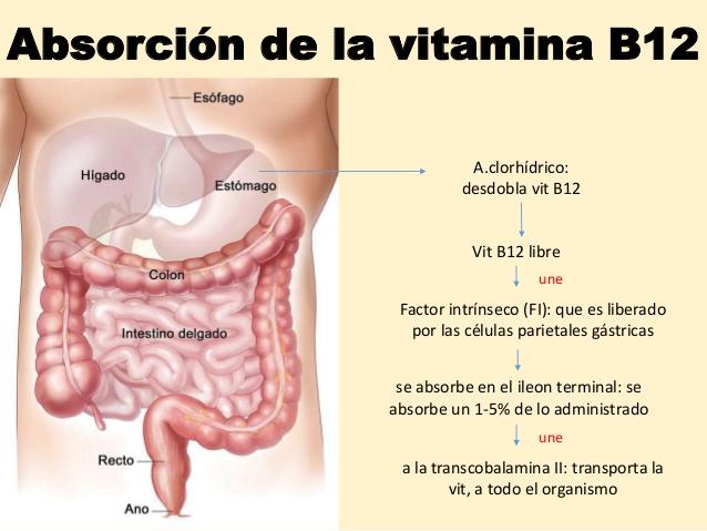 anemia-por-deficiencia-de-vitamina-b12-9-638