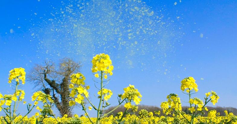polen-remedio-natural-contra-la-astenia-primaveral