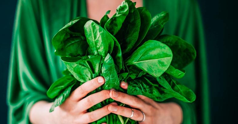 hojas-verdes-recuperar-vitalidad-y-fatiga