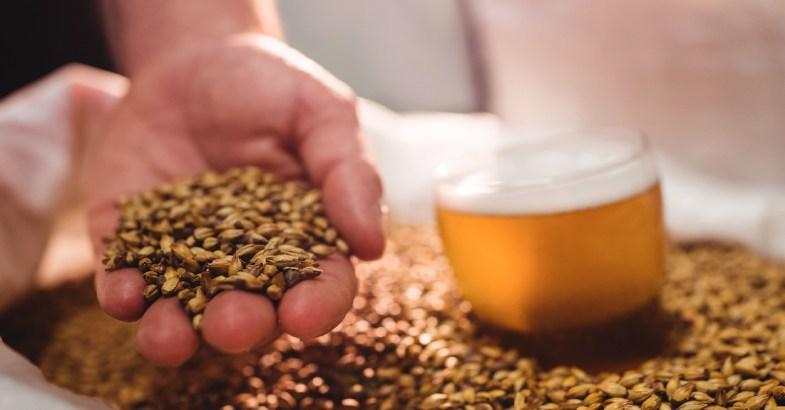 cebada-que-es-beneficios-cereales-integrales