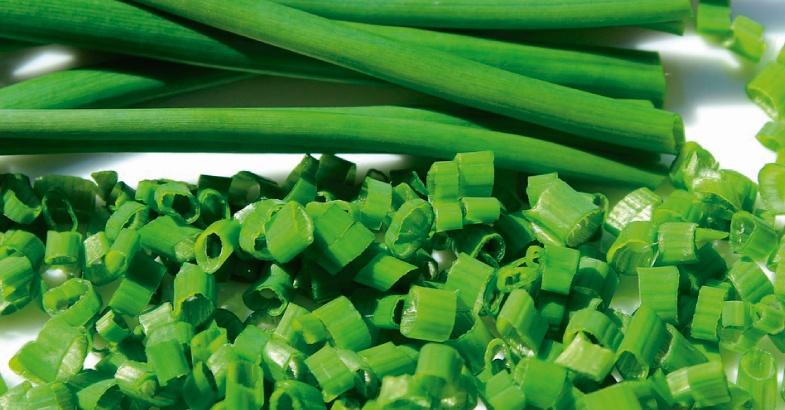 cebollino como planta con propiedades medicinales curativas y antiobiticos para mejorar la salud de forma natural