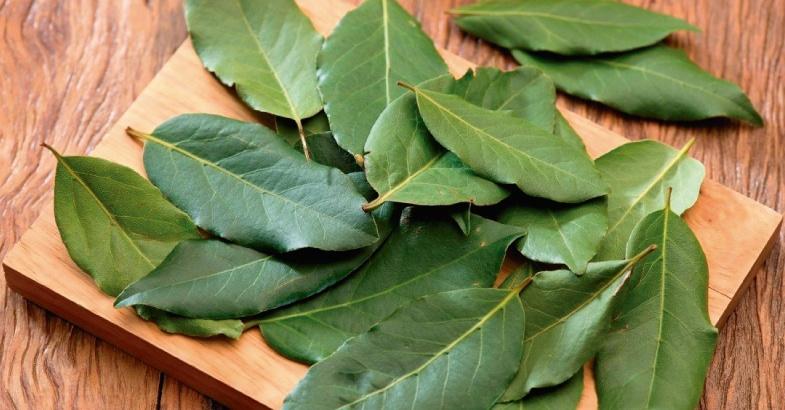 hoja de laurel propiedades y como se utiliza en la cocina alivia los dolores de menopausia