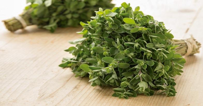 mejorana planta medicinal con propiedades medicinales y dieteticas para que sirve y como se usa