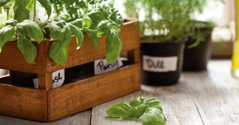 plantas con propiedades medicinales albahaca que es y para que sirve
