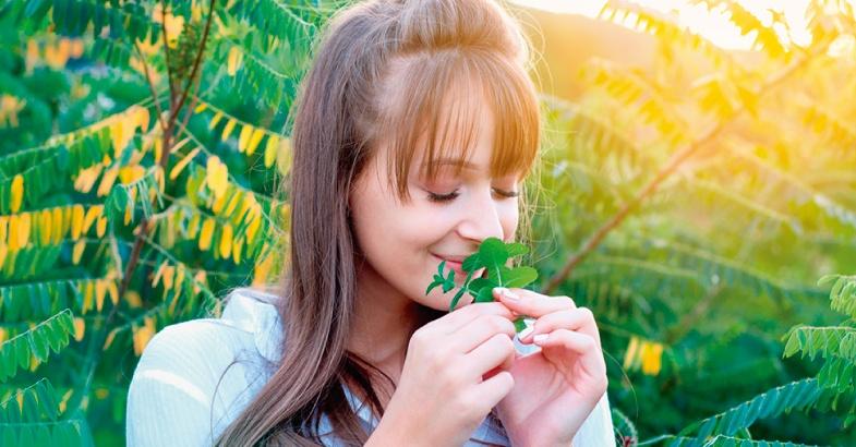 plantas con propiedades medicinales tomillo romero salvia orgeano estragon eneldo albahaca ajedrea mejorana laurel