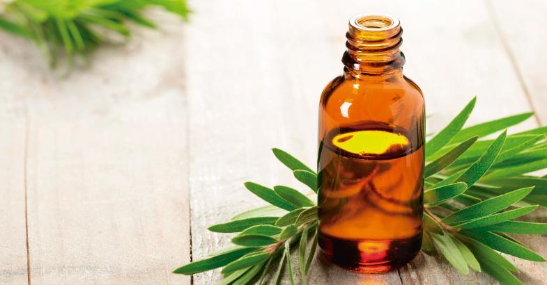 aceites vegetales y esenciales como el arbol del te que favorece la desaparicion de la tos el asma la caspa