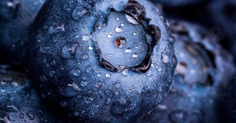 arandanos-propiedades-beneficios-como-se-comen