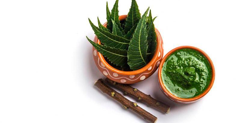 neem-arbol-aceites-esenciales-para-prevenir-picaduras-de-mosquitos