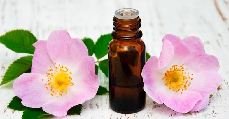 rosa-mosqueta-beneficios-origen-propiedades