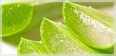 Productos Aloe Vera