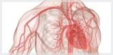 Productos para la Tensión Arterial Alta